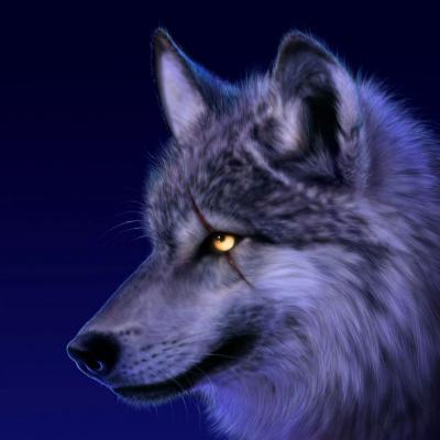 WOLFY_84