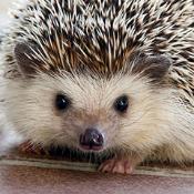 HedgehogIsGod