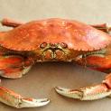 crabus.