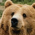 BearOgle
