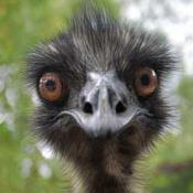 emu6114